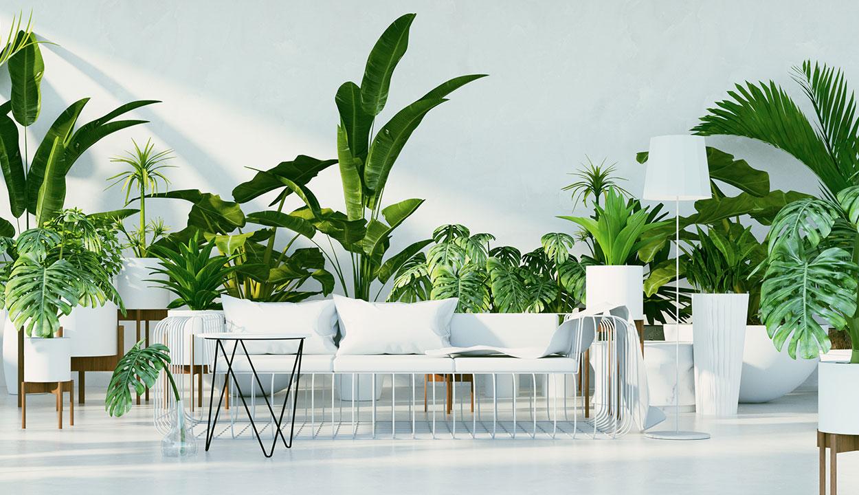 Le jardin d'intérieur