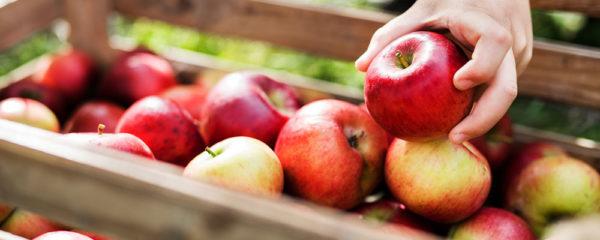 Quercétine pomme