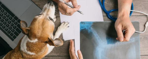 Orthopédie pour chien